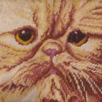 Petit point & Gros point Woolen Tapestry Red Peke-faced Persian cat closeup